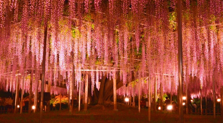 Парк Асикага, Япония