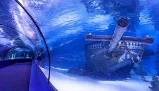 Превью фото о Океанариуме