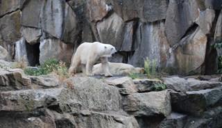 Превью фото о Берлинском зоопарке