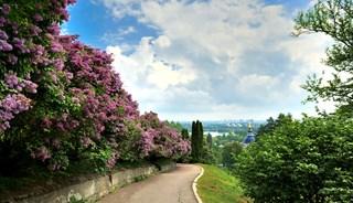 Превью фото о Ботаническом саде им. Гришко