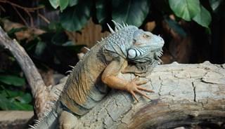 Превью фото о Зоопарке и Ботаническом саде