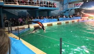 Превью фото о Дельфинарие