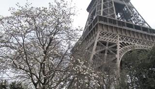 Превью фото о Эйфелевой башне
