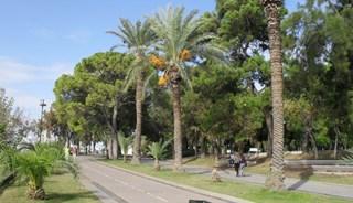 Превью фото о Парке Караалиоглу