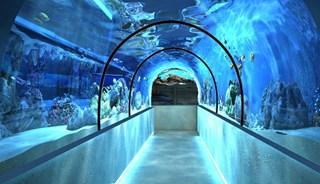 Превью фото о Океанариуме «Морская сказка»