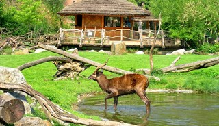 Превью фото о Пражском зоопарке