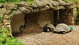 Превью фото о Зоопарке