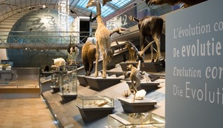 Превью фото о Музее природных искусств