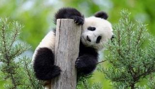 Превью фото о Шёнбруннском зоопарке