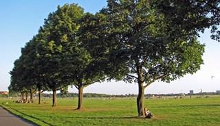 Превью фото о Темпельхофском парке