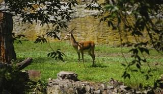 Превью фото о Варшавском зоопарке