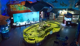 Превью фото о Зоопарке «Морской свет»