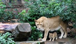 Превью фото о Зоопарке «Natura Artis Magistra»
