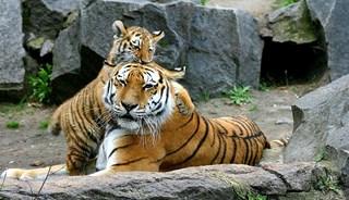 Превью фото о Зоопарке «Tierpark»